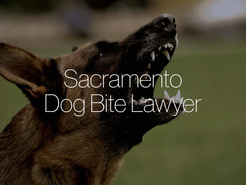 Sacramento Dog bite lawyer
